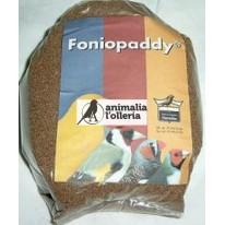 FONIO PADDY 1KG